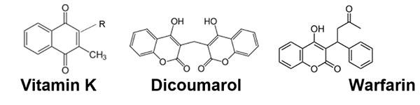 Kemiska strukturer för vitamin K, dikumarol och warfarin
