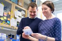 Moderna cancerläkemedel får draghjälp av bortglömd läkemedelskandidat