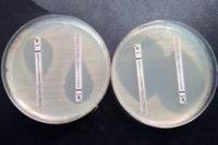 Nya gener som ger antibiotikaresistens kartlagda