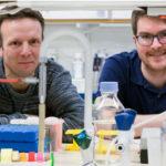 Delande blodkärl ger nytt hopp för gammalt spår inom cancerforskning